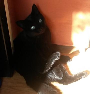 viel soße für katzen